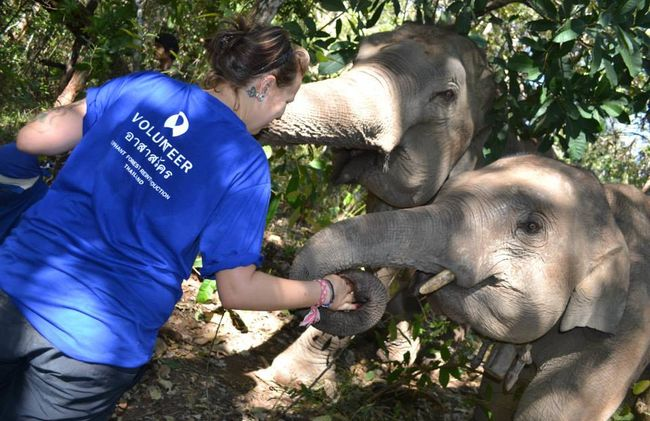 /projects/global-vision-international-volunteer-elephants-chiang-mai-thailand/