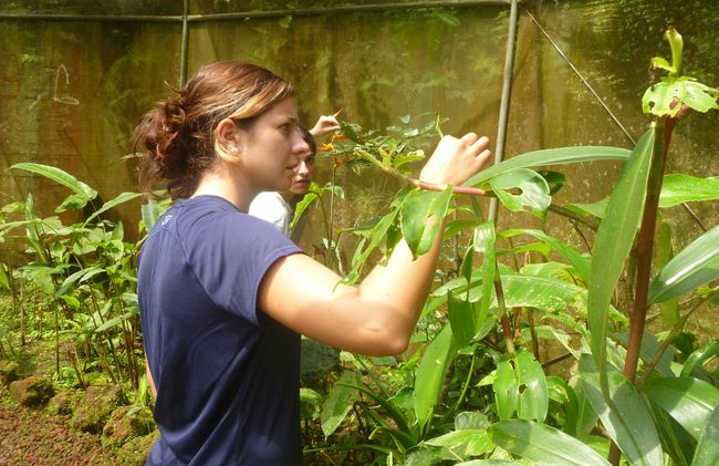 /projects/uvolunteer-environmental-conservation-cloud-forest-san-ramon-costa-rica/