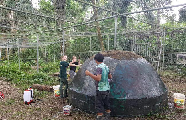 /projects/bamba-experience-volunteer-peruvian-amazon-tour-machu-picchu/
