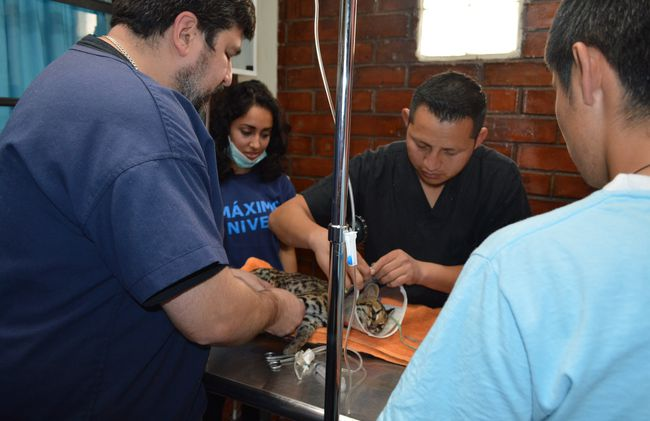 /projects/maximo-nivel-volunteer-animal-care-guatemala/