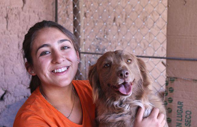 /projects/maximo-nivel-volunteer-animal-care-peru/