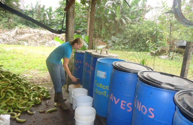 /projects/inlexca-volunteer-environmental-conservation-costa-rica/