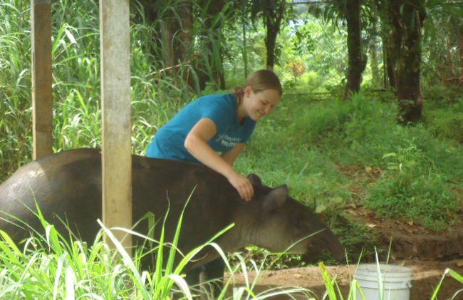 /projects/inlexca-volunteer-wild-animals-wildlife-san-ramon-costa-rica/