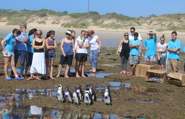 /projects/khaya-volunteer-projects-penguin-rescue-center-south-africa/