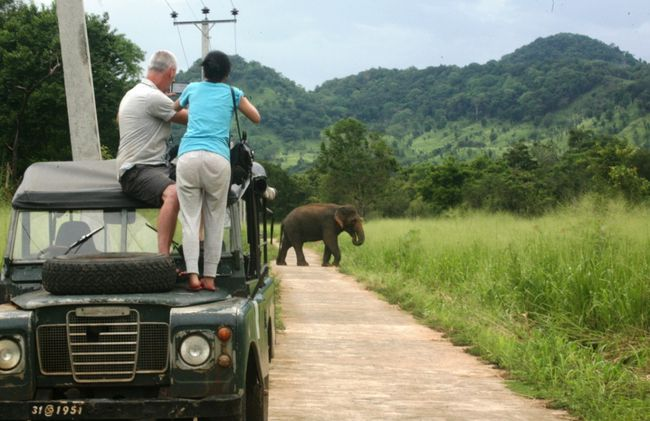 /projects/Volunteering-Journeys-award-winning-wild-elephant-conservation-program-in-sri-lanka/