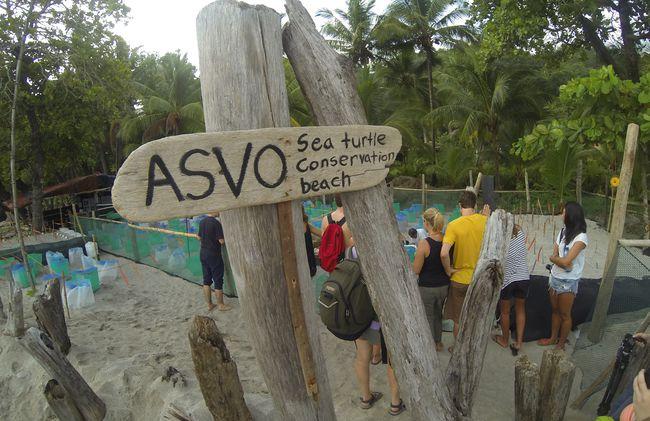 /projects/uvolunteer-sea-turtle-conservation-costa-rica/