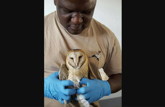 /projects/awesome-work-travel-volunteer-wildlife-hospital-south-africa/