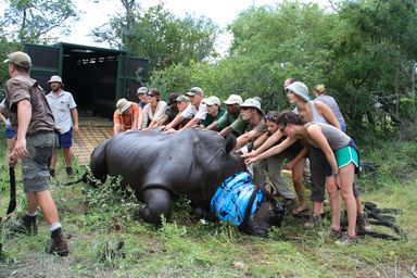 /projects/global-vision-international-volunteer-big-five-game-reserve-south-africa/