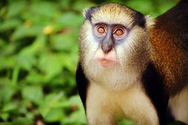 /projects/uvolunteer-national-park-reserve-ghana/