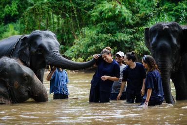 /projects/volunteering-solutions-elephants-surin-thailand/