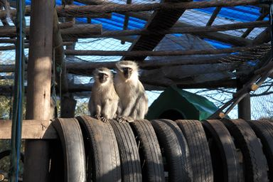 /projects/khaya-volunteer-projects-primate-rescue-center-south-africa/